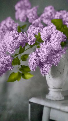 'Lilacs in White' photograph by C J Anderson