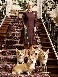 Royal corgis.
