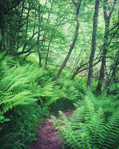 Fern forest, Wales www.realwalestours.com