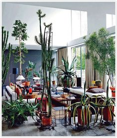 Plants just make a room better, don't you think?