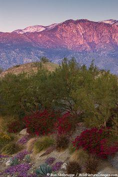 San Jacinto Mountains, Coachella Valley, California; photo by Ron Niebrugge