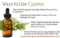I think cypress is a fresh, masculine scent. I love to rub it on my feet with some jojoba oil to stop the stinkies!