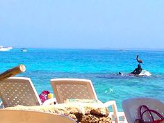 Isla del pirata - Cartagena  https://emcriseeconomica.wordpress.com/2015/08/27/cartagena-de-indias-caribe-economico/