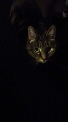 darkness of cat