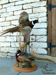 Pheasant mount by Little Stream Taxidermy Deer Hunting Decor, Deer Hunting Tips, Hunting Cabin, Archery Hunting, Bow Hunting, Pheasant Mounts, Deer Mounts, Pheasant Hunting, Taxidermy Decor