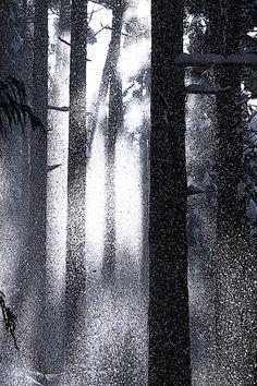 Snow forest 落雪
