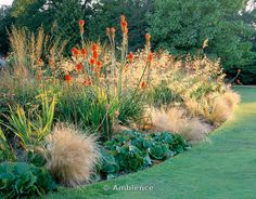 Border beside lawn with Stipa Gigantea and Kniphofia Uvaria 'Nobilis', Stipa Tenuissima, Bergenia Cordifolia, Molinia. Cotswold Wildlife Park, Oxfordshire
