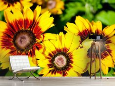 Foto #Tapete Reife Sonnenblumen Photos, Self Adhesive Wallpaper, Photo Wallpaper, Wall Papers, Nice Asses