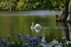 Swan Lake, Sumter, SC: one of the most beautiful places for flowers and wildlife
