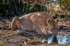 Wildlife at Jao Camp, Botswana