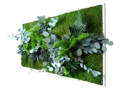 http://www.greenrepublic.fr/tableau-vegetal-stabilise-bois-blanc-rectangle-xl.html