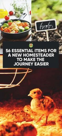 56 Essential Items f