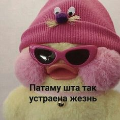 Memes Funny Faces, Stupid Memes, Hello Memes, Happy Memes, Russian Memes, Funny Mems, Cute Animal Memes, I Luv U, Aesthetic Iphone Wallpaper