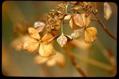 Nature Photography golden rust Winter by moonlightphotography,