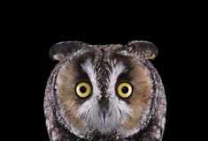 Owls have fascinated us for the millennium. They frequently appear in our stories and myths back in the ancient Greek and Egyptian times. Many different cultures across various regions of the world have bestowed symbolic meaning upon owls, seeing them as keepers of wisdom, protectors of the dead, and guardians of the underworld.