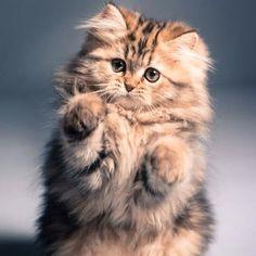 """@adorable_animals's photo: """"• So Fluffy!  By Unknown  @BESTVINES @BESTVINES @BESTVINES"""""""