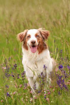 Flowerfield dog by Nea Rippitsch on 500px