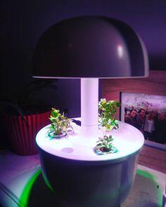@olive_nantaise 🌱🌱🌱#persil #plantui3e #plantui #nature #smartgarden #apartmentgardening #hydroponicgarden #hydroponics #hydroponie #greengarden #green Hydroponic Gardening, Hydroponics, Smart Garden, Green Garden, Table Lamp, Plants, Instagram, Home Decor, Table Lamps