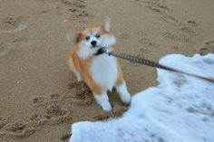 """""""If they wanted me to go in the ocean, then they never should have watched Jaws while I was in the room."""" #puppied"""