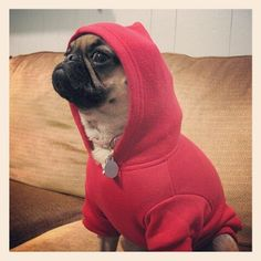 Dont mess with a thug pug...haha!  That's what my dog would look like in a hoodie. hahahah!