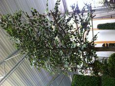 Leiboom met vlamvertragend beukenblad! Plants, Plant, Planets