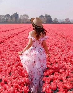 tulips garden care Discovered by g . Find images and videos on We Heart It - the app to get lost in what you love.