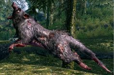 SKEEVER     Skeevers are large, rat-like creatures that make their nests in caves, sewers, and underground warrens, etc. While easy to kill, they can be a challenge in groups, and carry debilitating diseases.
