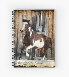 Pinto Horse on the Run by NaturePrints
