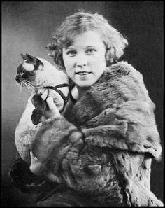 crazy siamese cat   cat siamese fur coat vintage flapper vamp cat show