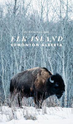 Elk Island au Canada