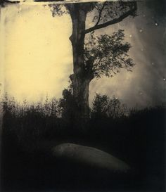 Sally Mann: Untitled (Deep South #5), 1998.