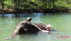 Elephant bathing & feeding and Thai Coffee traditional drinks & dessert