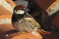 The Delights of Casa Oreste: for a birder on holiday » The Sardinia Blog
