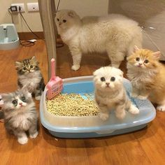 Cats In The Cradle Product Baby Rabbits For Sale, Google Cats, Persian Kittens, Cute Little Animals, Pets, Humility, Bison, Badger, Donkey