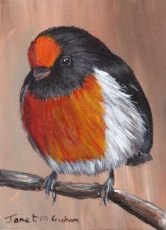 Bird Art Painting Red Capped Robin Australian Bird by ArtDownUnder
