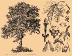 Brockhaus and Efron Encyclopedic Dictionary