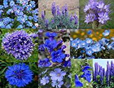 Every garden needs the personal touch that comes from unique and diverse plants. Yet those plants are not always the easiest to care for. These lists of tried-and-true hardy perennials for sun and shade are essential to build the foundation of a garden.Whether you're hoping to start a new garden from scratch, or fill in …