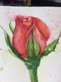 Red Rose Watercolor Painting Pink Rose Original by OlechkaDesign