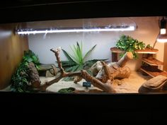 Are you thinking of buying a tortoise to keep? If so there are some important things to consider. Tortoise pet care takes some planning if you want to be. Bearded Dragon Habitat, Bearded Dragon Cage, Tortoise Vivarium, Hermit Crab Tank, Easy Pets, Pet Turtle, Pet Dragon, Reptile Enclosure, Pet Care