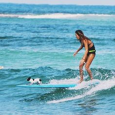 OMG!!! Repost from Local Surfer @aliciiakelley surfing with the cutest little puppy!   #inlove #puppysurfing #aulani #koolina #dogsofinstagram #love #doglover #dogsurfing #perfect