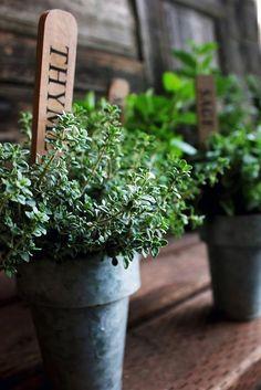 Почему я люблю комнатные растения больше людей | ВКонтакте