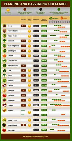 10 Fruits and Vegetables That Grow Fast Vegetable garden, Plants, Food garden, Planting vegetables, Organic Gardening, Gardening Tips, Gardening For Beginners, Gardening With Kids, Gardening Apron, Gardening Magazines, Gardening Services, Gardening Quotes, Gardening Books