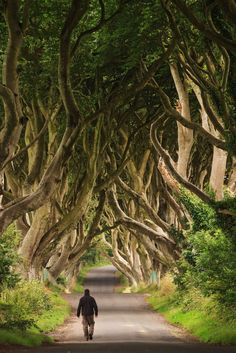 Dark Hedges, Ballymoney, Ireland. This beautiful avenue of beech trees was planted by the Stuart family in the eighteenth century. It was intended as a compelling landscape feature to impress visitors as they approached the entrance to their home, Gracehill House. They are reputedly haunted by a 'Grey lady'. Two centuries later, the trees remain a magnificent sight as they form an arc over the road and have become known as the Dark Hedges.