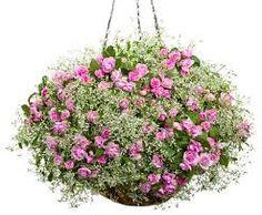 Image result for complete hanging basket system with lights
