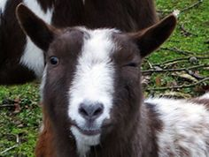 Do I see him winking? by hugodejong35