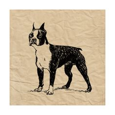 Tangletown Fine Art Boston Terrier by Sabine Berg Fine Art Giclee Print on Gallery Wrap Canvas, 24 Boston Terrier Art, Terrier Breeds, Terrier Dogs, Boy Halloween Costumes, Canadian Art, Buy Art Online, Art Auction, 5 D, Wrapped Canvas