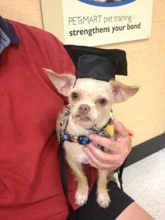 Macho  graduated from Beginners Education from Petco. He's so cute and smart!!