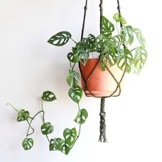 Today is not Monstera Monday. I was inspired by today's post of Morgan from who posted photo of Monstera Planting Succulents, Garden Plants, Planting Flowers, Garden Walls, House Plants Decor, Plant Decor, Hanging Plants, Indoor Plants, Indoor Gardening