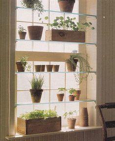 En disposant de discrètes tablettes de verre dans le cadre d'une fenêtre, on gagne de l'espace pour y faire pousser notre verdure qui ne manquera ainsi jamais de lumière.