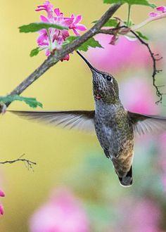 Hummingbird by Angie Vogel